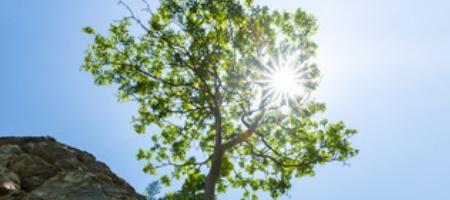 Resilienzbaum